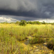 Storm Over the Everglades — Stock Photo
