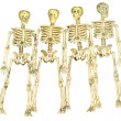 Stock Photo: Group of Skeletons