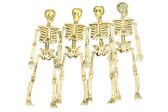 Group of Skeletons — Stock Photo