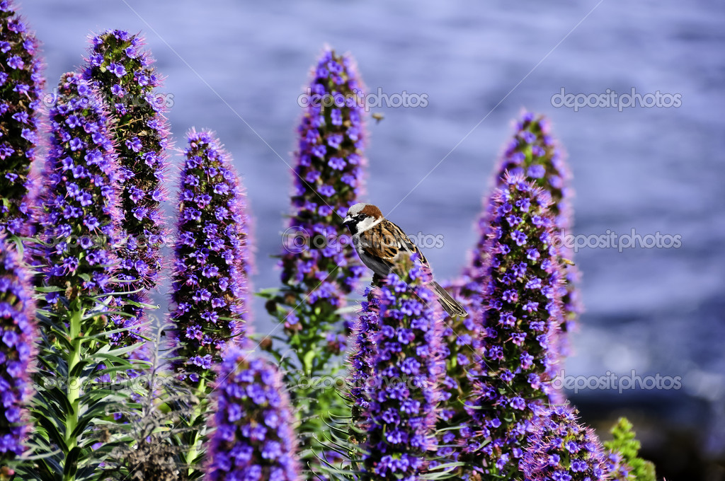 A small sparrow perched on purple flowers — Stock Photo #5468314