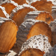 Abstract of Freshly Cut Pine Logs — Stock Photo