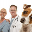 Jack Russell Terrier and Veterinarians Behind — Stock Photo