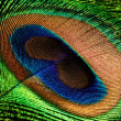 Stock Photo: Peacock feather eye