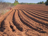Spring Plowed Field — Stock Photo
