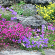 Stock Photo: Alpine Rockgarden