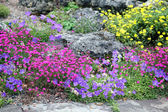Alpine Rockgarden — Stock Photo