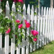 Rose Picket Fence — Stock Photo