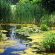 Lily Pond — Stock Photo #5658759