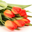 Foto de Stock  : Tulip Bouquet