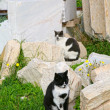 Stock Photo: Parthenon Cats