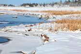 冬季盐沼 — 图库照片