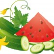 Cucumber slices and watermelon — Vector de stock