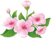 Flor de cerezo — Vector de stock