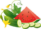 Cucumber slices and watermelon — Stock Vector