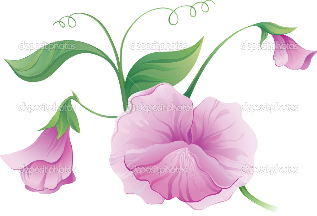 Sweet pea flower — Stock Vector #6464336