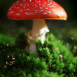 Stock Photo: Toadstool