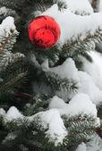 Ball shaped decoration on snowed pine tree — Stockfoto