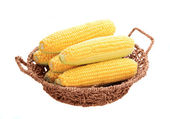 Corn on the cob in basket — Stock Photo