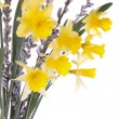 Spring daffodil flowers isolated over white — Stock Photo
