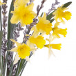 Stock Photo: Spring daffodil flowers isolated over white