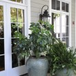 Outdoor potted plants - Stock Photo