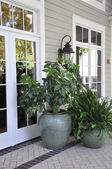 Outdoor potted plants — Stock Photo