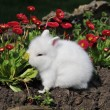 Stock Photo: White rabbit in red flowers