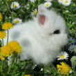 Stock Photo: White rabbit in yellow flowers