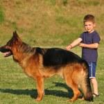 Boy with a German Shepherd — Stock Photo #5865012