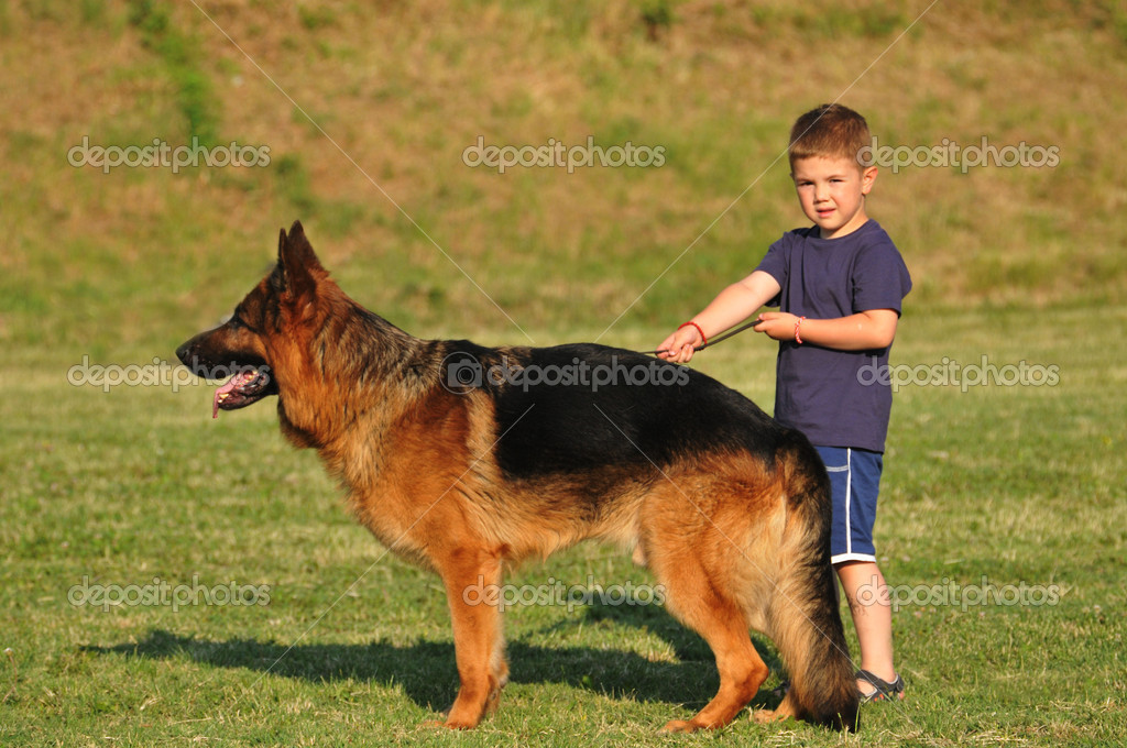 long haired german shepherd breeders in ny
