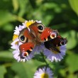 Butterfly on flower — Stock Photo #5990348