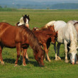 Wild horses on the field — Stockfoto