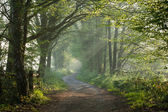 Countryside track in early morning sunlight — Stock Photo