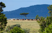 Maasai Herdsman on Masai Mara — Stock Photo