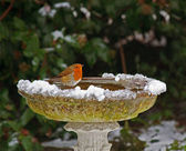 Robin on bird bath in snow — Stock Photo