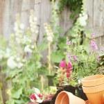 Цветочные горшки — Стоковое фото
