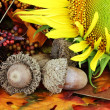 Autumn Still Life — Stock Photo #6469116