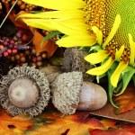 Autumn Still Life — Stock Photo #6469116