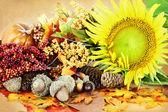 Autumn Display — Stock Photo