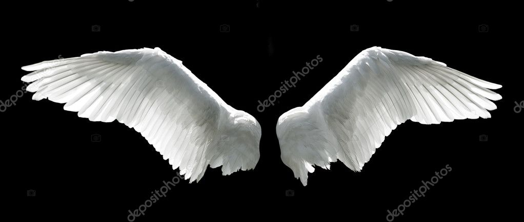 Angel wings isolated on the black background. — Stock Photo #6098891