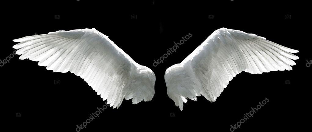 Крылья ангела — Стоковое фото © prudkov #6098891: http://ru.depositphotos.com/6098891/stock-photo-angel-wings.html