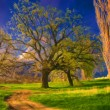Landscape painting - huge trees, meadow and the road — Stock Photo