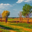 Colorful landscape painting showing trees — Stock Photo