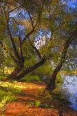 Landscape painting - trees beside the river — Stock Photo
