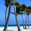 Stock Photo: Perfect white sand beach
