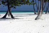 Perfect white sand beach landscape — Stock fotografie