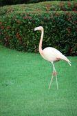Flamingo in garden — Stockfoto