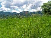 Grasachtig veld met bergen en een helder blauwe hemel in achtergrond — Stockfoto
