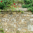Roses on stone wall — Stock Photo #6057545