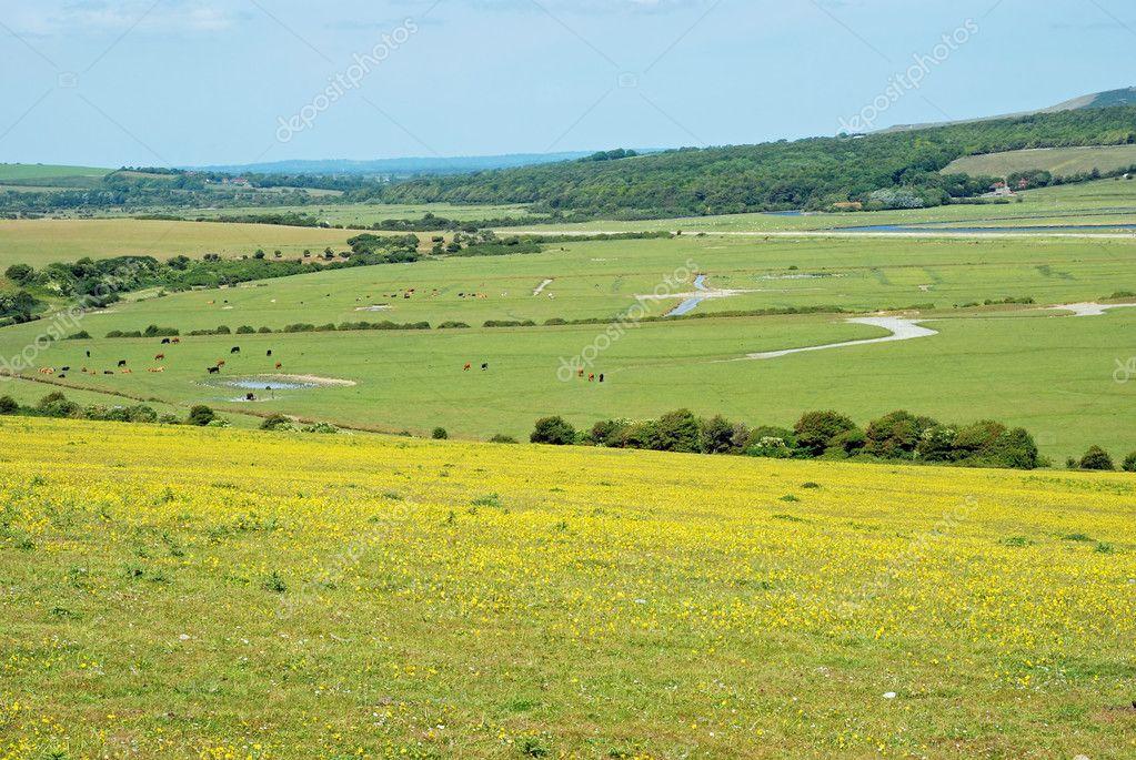 Campagna inglese con fiori di campo foto stock for Piani di campagna inglese